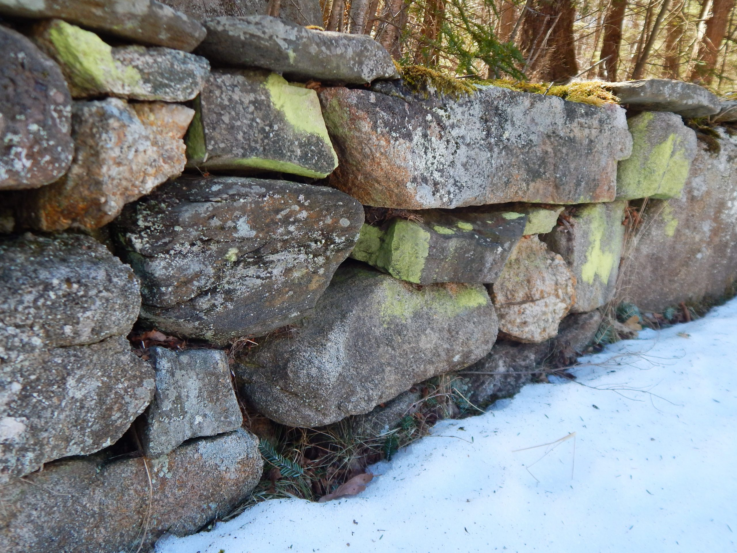 stonewall covered in variying shades of green lichen with snow on the ground.