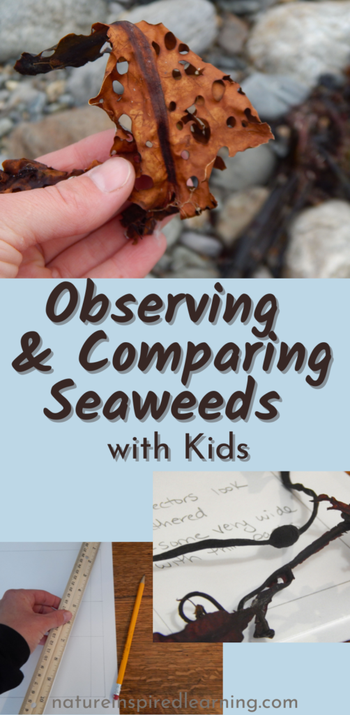 observing and comparing seaweeds with kids natureinspiredlearning text with seaweed images light blue background