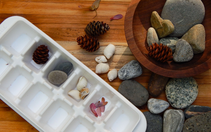 white ice cube tray containing pine cones rocks shells and seeds sorted by amount wooden bowl with rocks pine cones seeds and rocks on wooden board