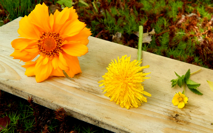 three yellow flowers sorted by color in a classification activity for preschoolers on a wooden surface outside