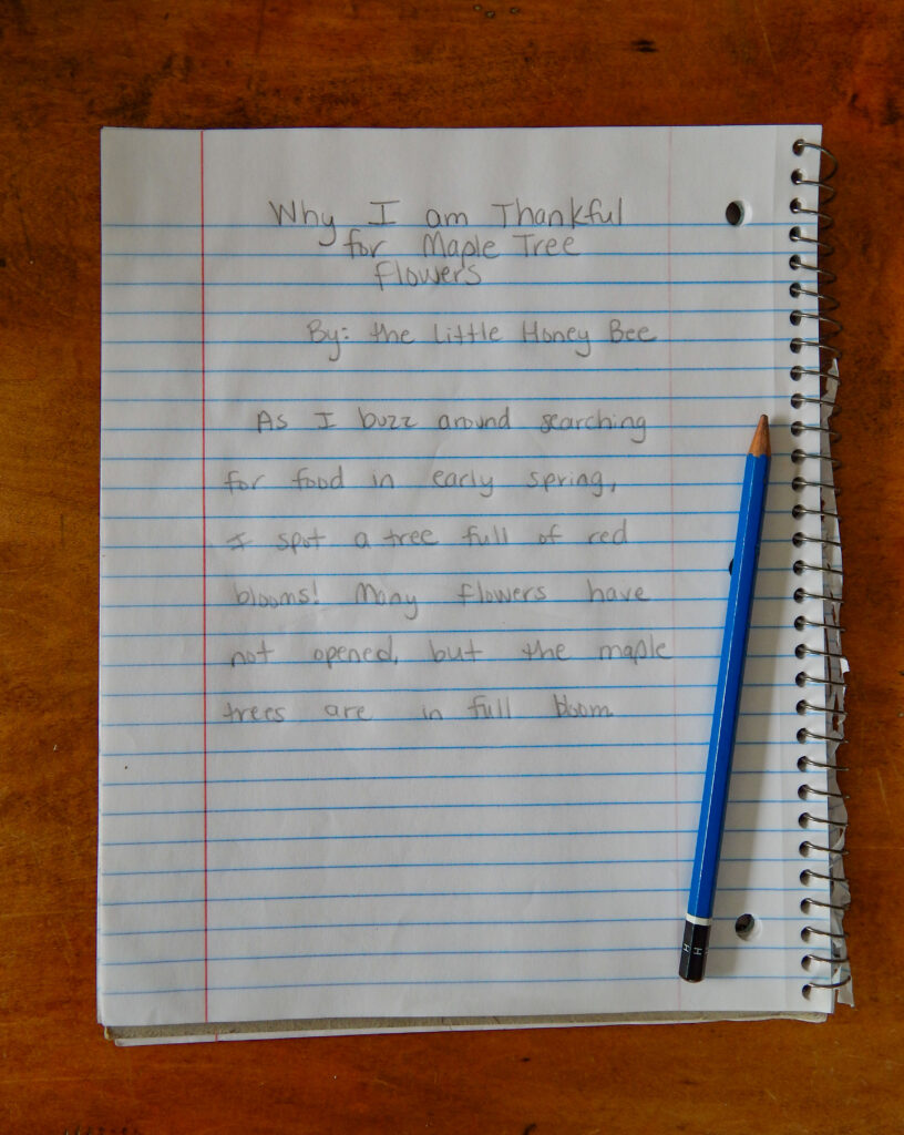 Story about bees and maple tree blooms in the spring science notebook