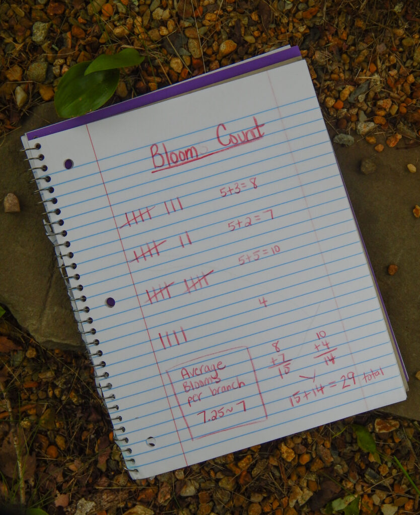 maple tree bloom count with average science notebook entry