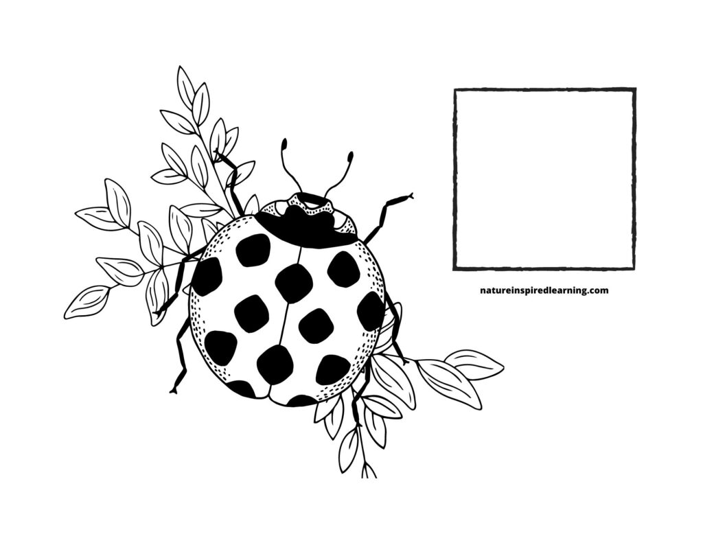 Counting Lady bugs Coloring Page 1