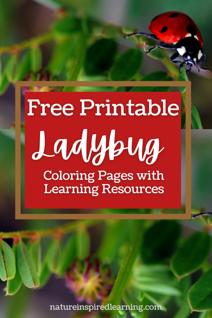 free printable ladybug coloring pages with learning resources pin red background ladybug on greenery