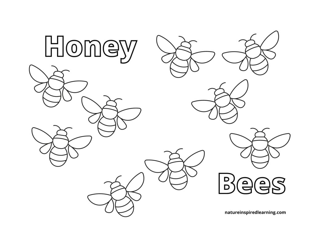 honey bees coloring page count the cute bees