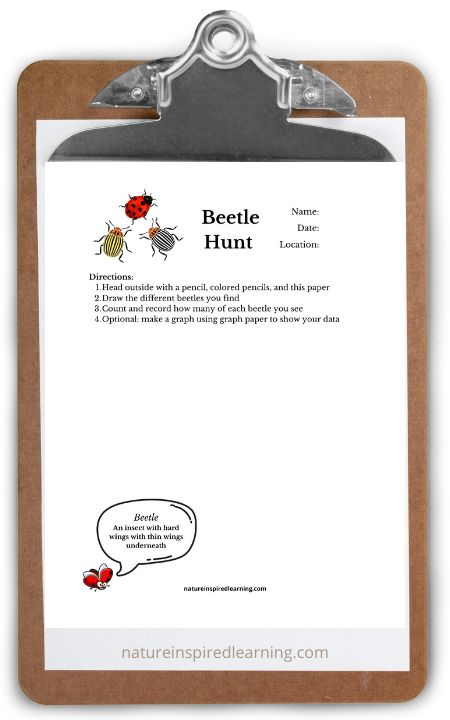 beetle hunt worksheet printable on clipboard