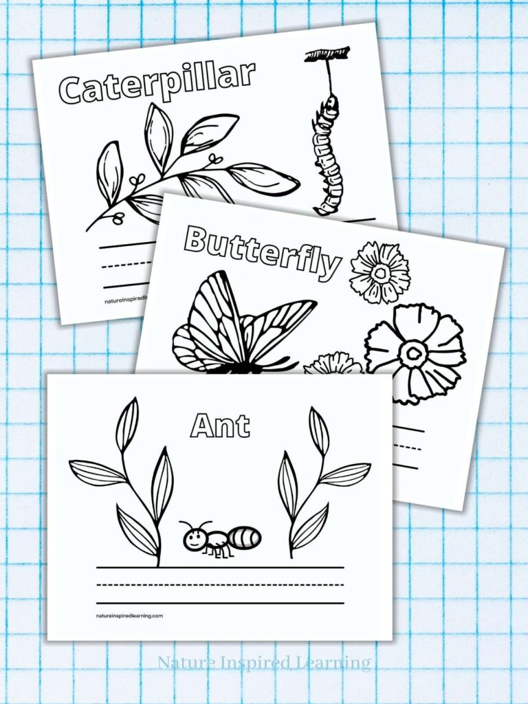 A is for Ant coloring page, B is for Butterfly coloring page, C is for caterpillar coloring page all overlapping with a light blue graph paper background