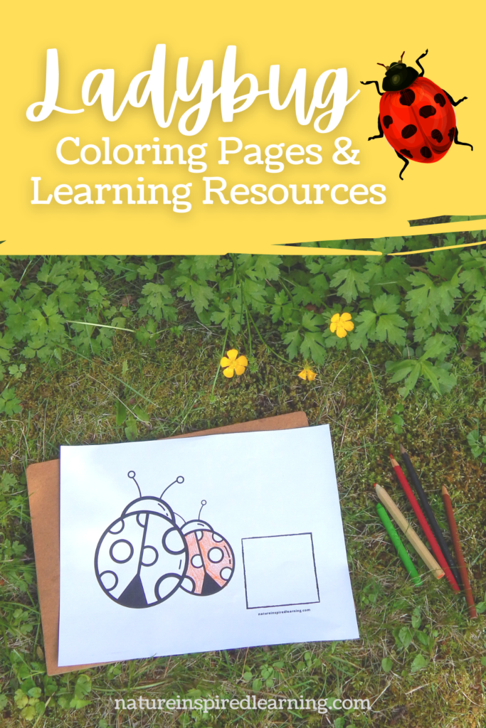 coloring page outside with colored pencils in the grass with the text natureinspiredlearning.com