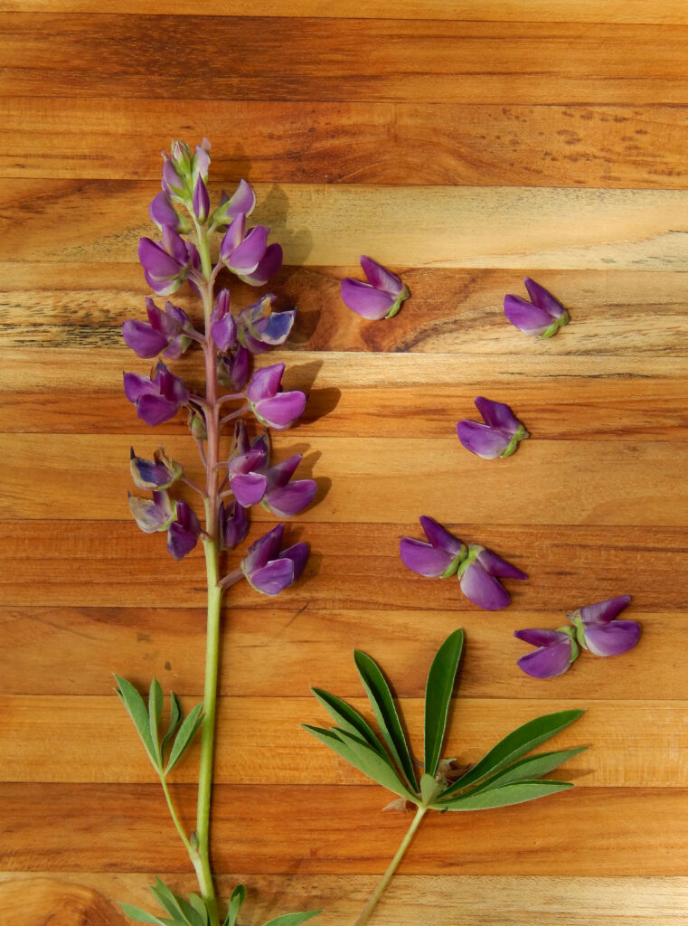 purple lupin on a wooden board with petals turned into butterflies
