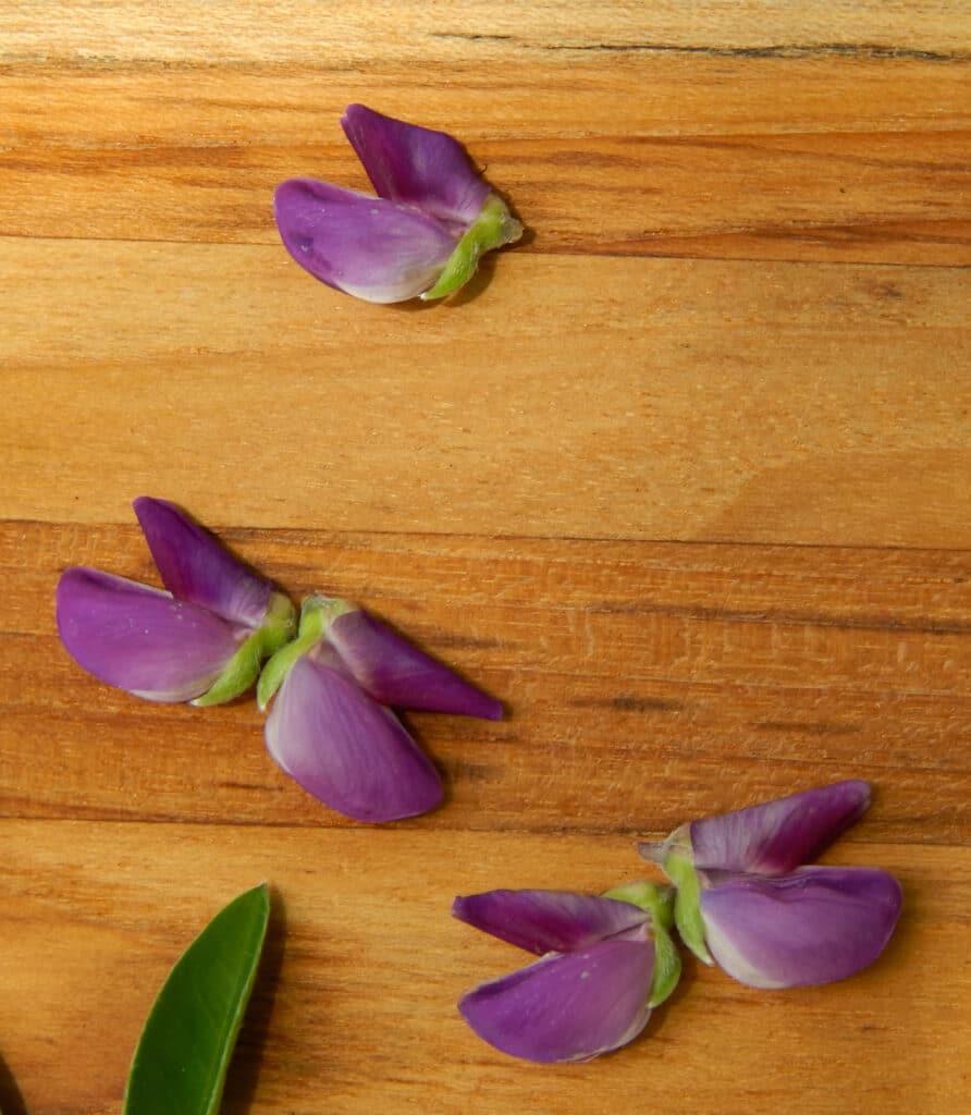 cute little butterflies made out of purple lupin petals