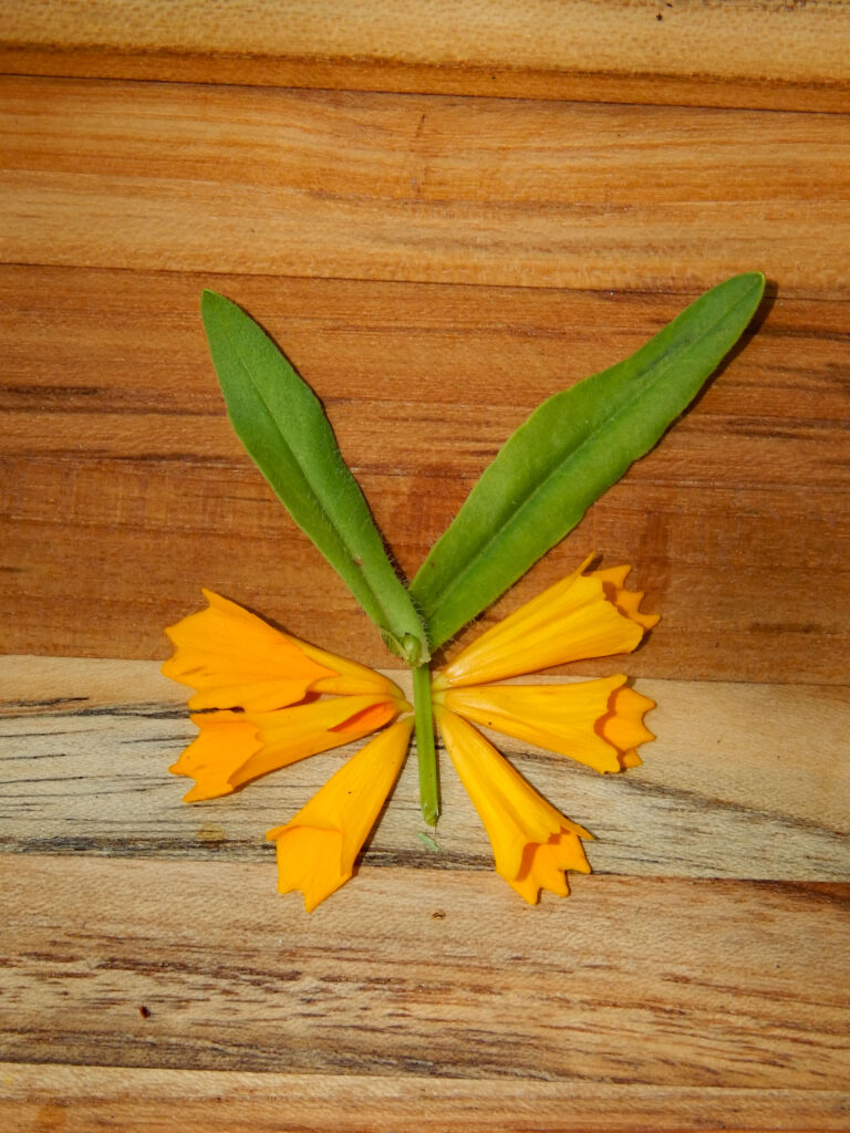 yellow coreopsis butterfly on wooden board summer craft