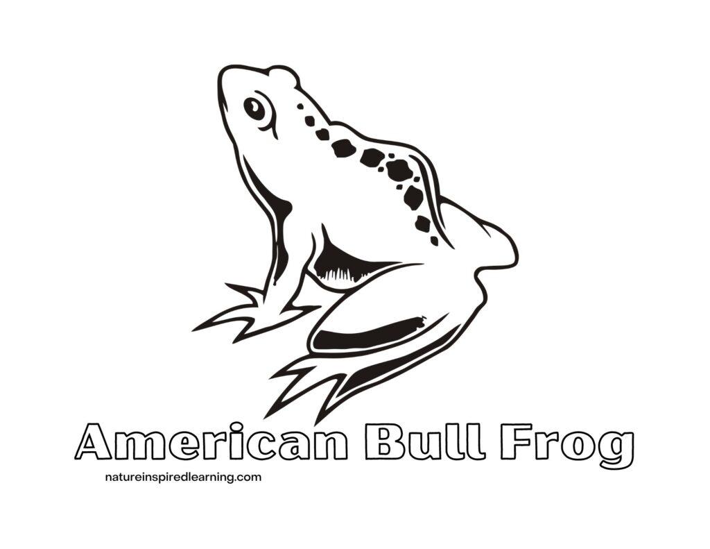 american bull frog coloring sheet