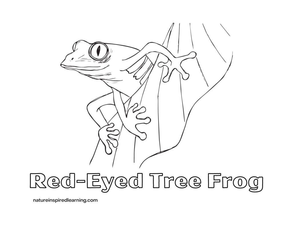 red-eyed tree frog coloring sheet