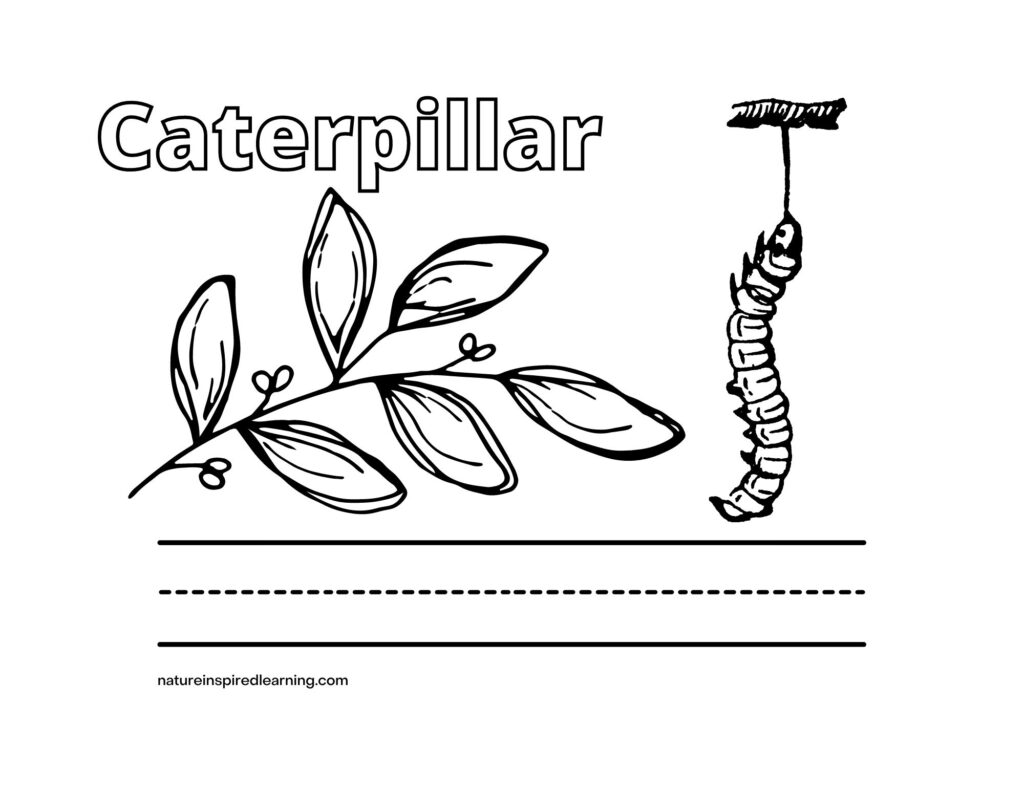Caterpillar word with image and leaf coloring sheet