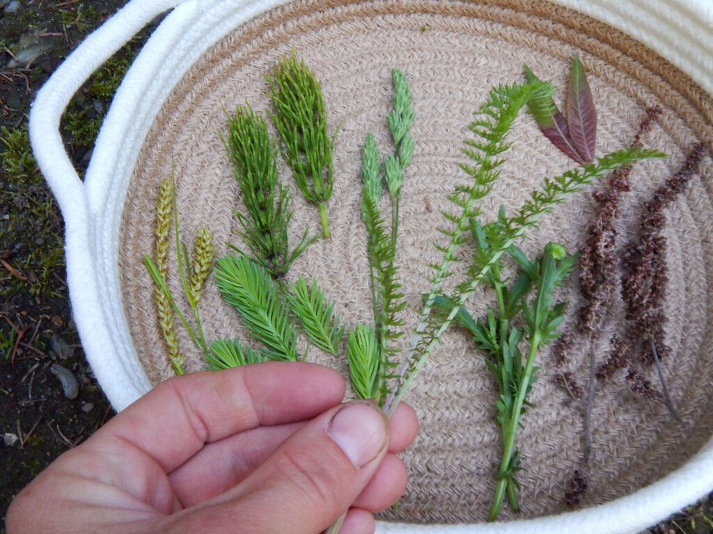 hand holding greenery used for butterfly craft antenna more natural elements placed in a woven basket
