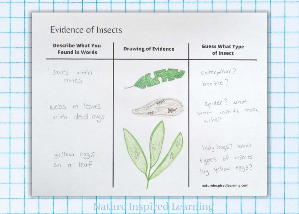 filled out evidence of insects worksheet with drawings done in colored pencil light blue graph paper background