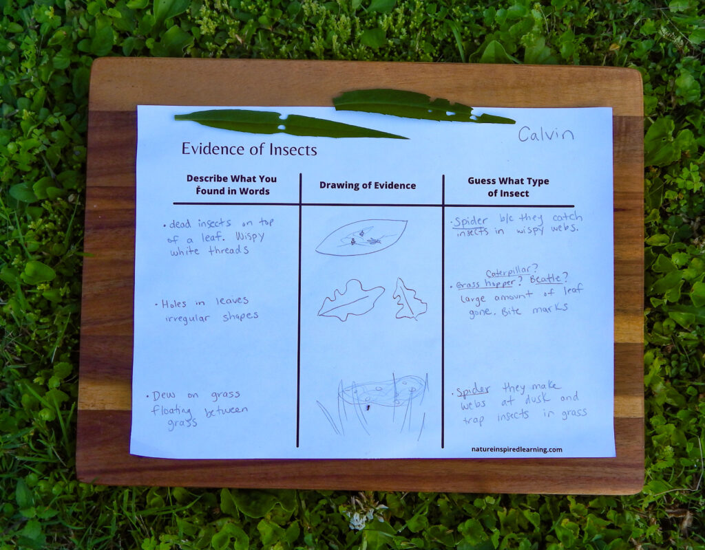 evidence of insects worksheet outside on wooden board in green grass