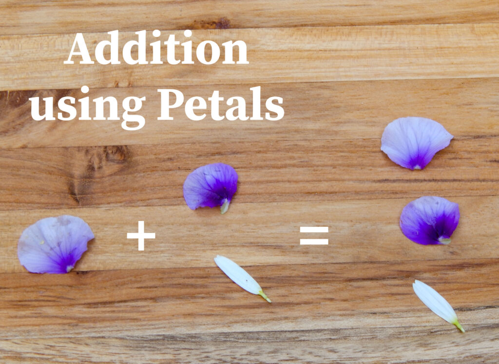 addition using petals one petal plus two petals equals three petals arranged on a wooden surface