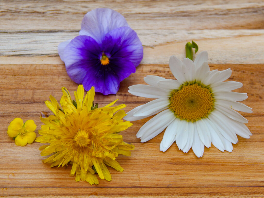 flowers that contain yellow as the main color or secondary color purple pansy, ox eye daisy, dandelion, and yellow strawberry