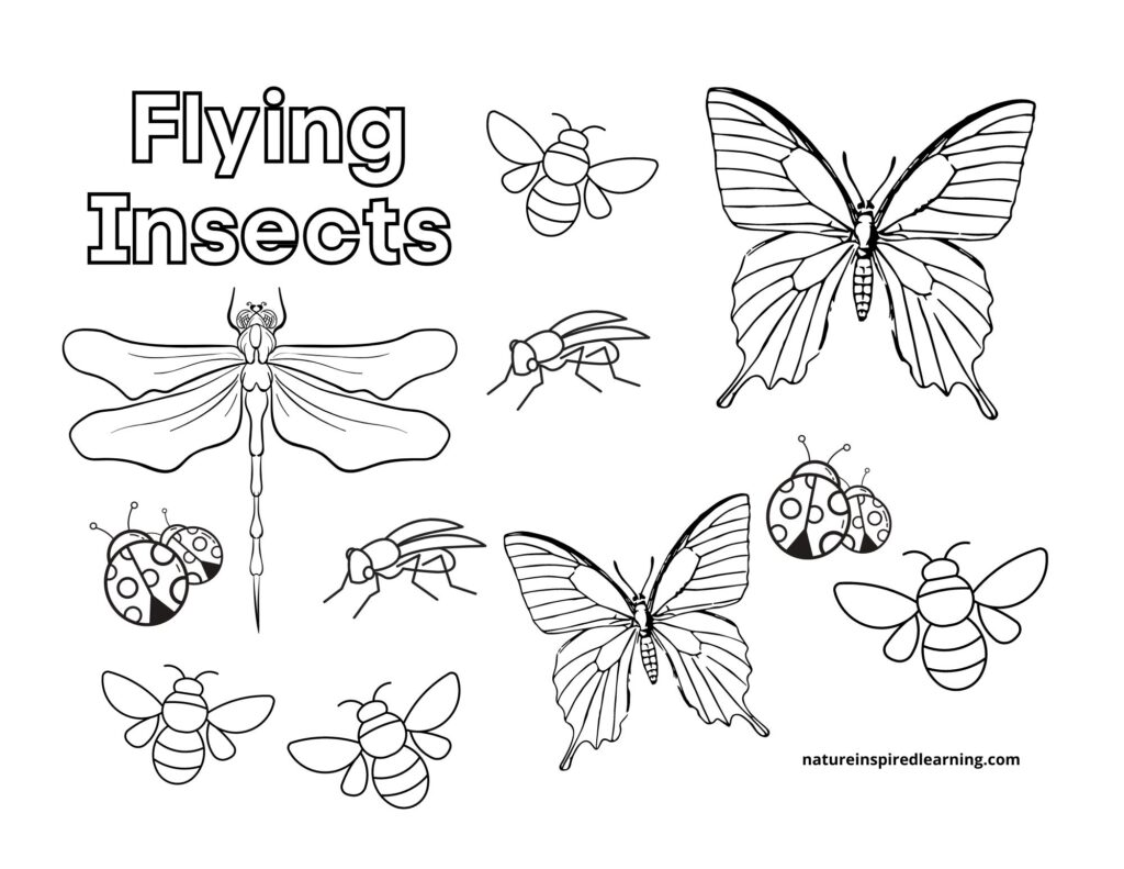 flying insects coloring page and counting sheet
