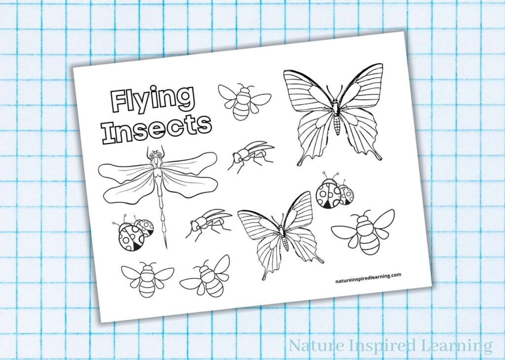 flying insects printable coloring page light blue graph paper background