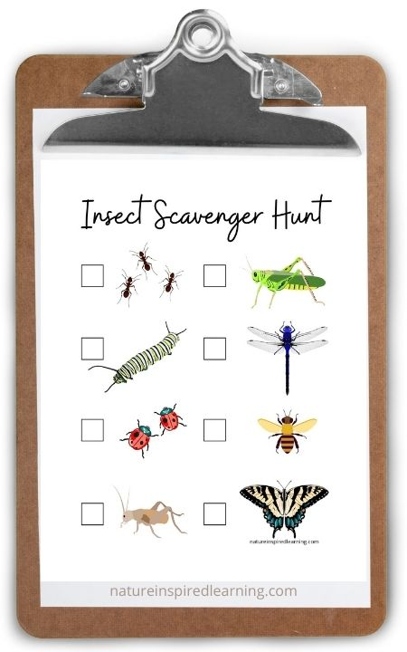 clipboard with insect scavenger hunt 8 bugs color graphics