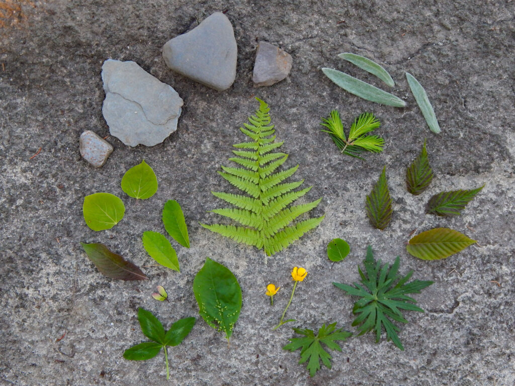 natural elements collected to make butterfly wings for a craft for kids