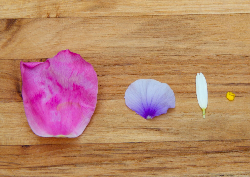 large pink rose petal on left, medium purple pansy flower petal, white daisy petal, and tiny yellow strawberry petal sorted by size