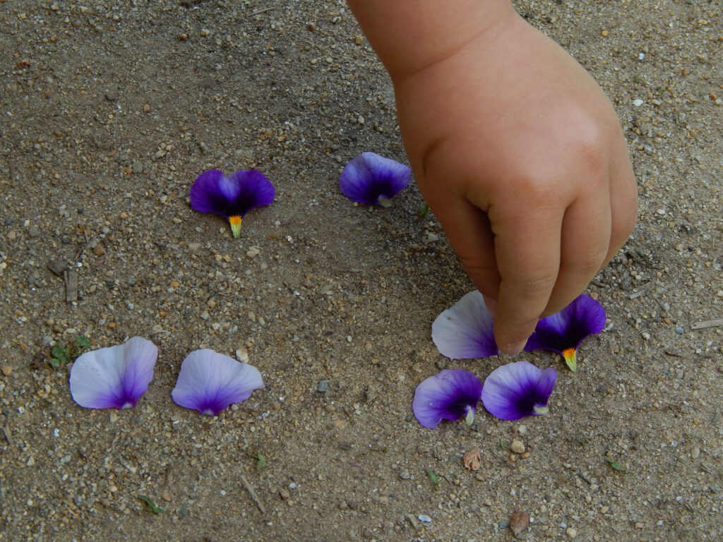 toddler hand about to pick up a purple flower petal sorted into number groups