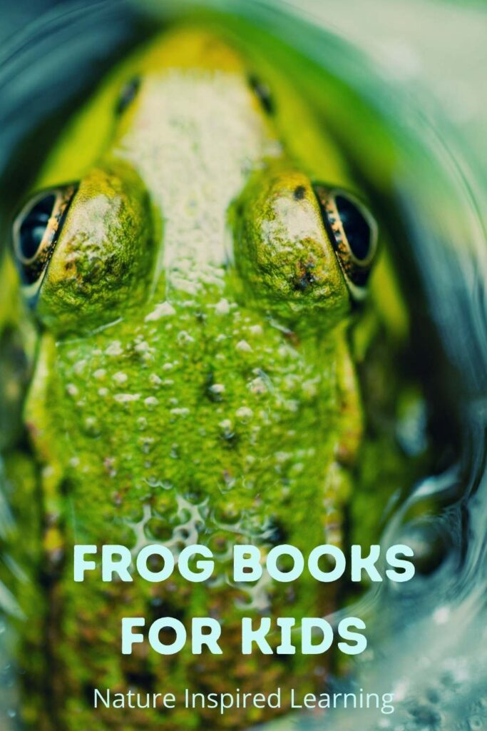 top view of an american bull frog in the water text frog books for kids nature inspired learning in light blue