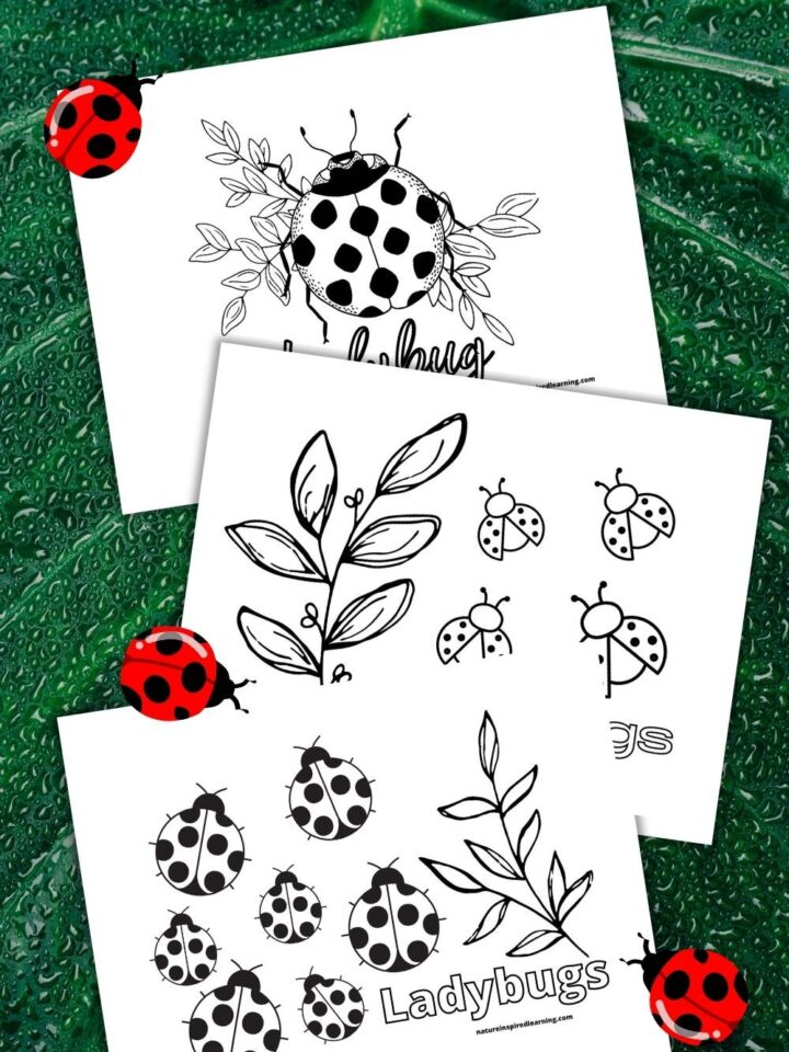 three free ladybug coloring pages overlapping wet green leaf background with three ladybugs crawling on the coloring sheets