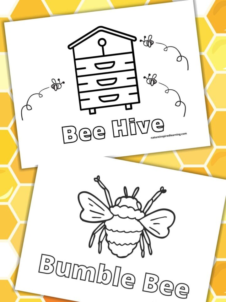 two printable bee coloring pages bee hive and bumble bee overlapping on a honeycomb background shades of yellow, white, and orange