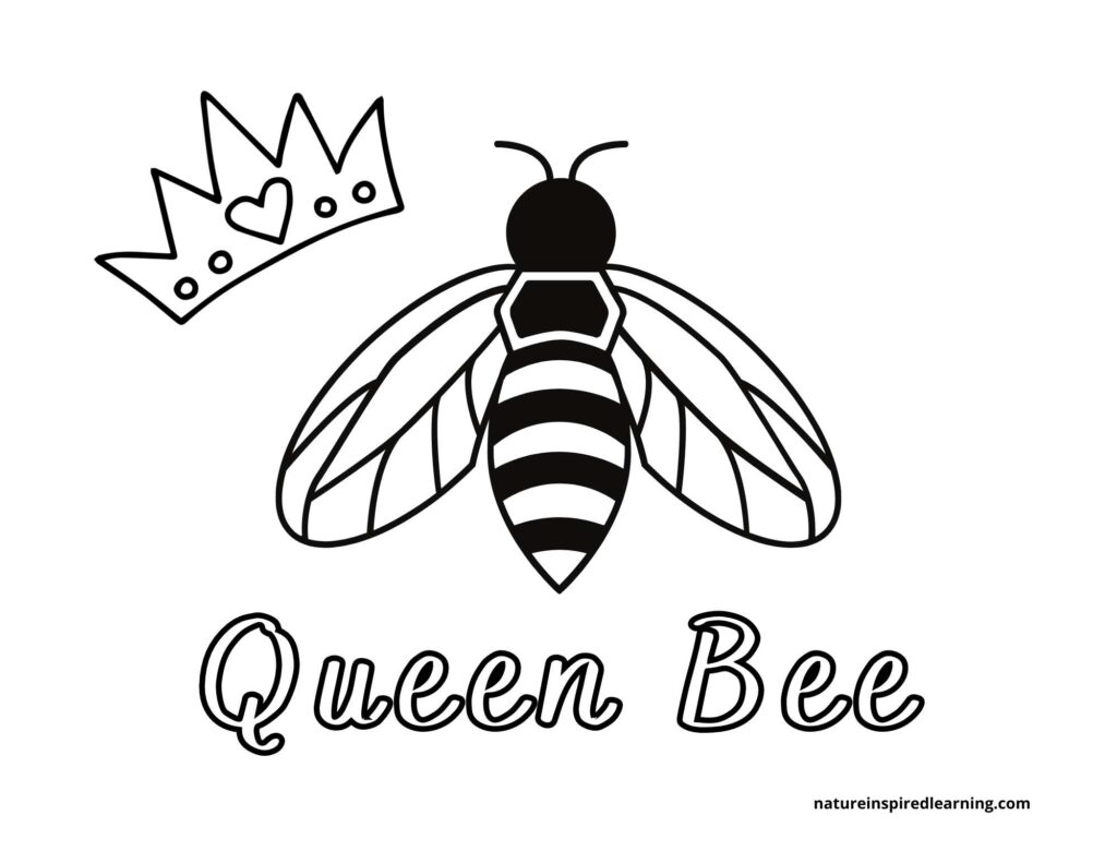 queen bee clipart with the words queen bee below the bee with a crown with a heart to the left of the queen