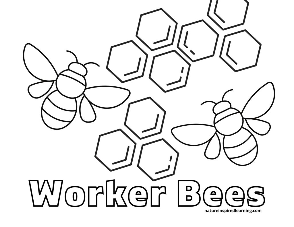 two worker bees on either side of honey combs with text worker bees below