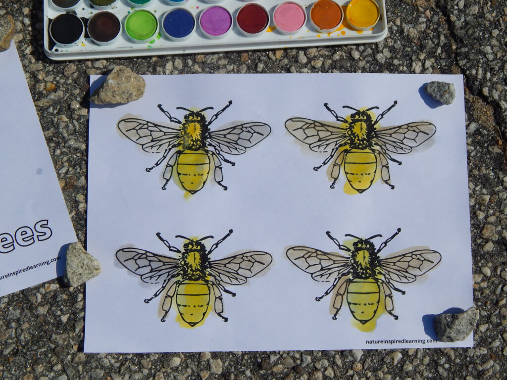 free printable cute bumble bees coloring page outside with paint set held down with rocks on four corners