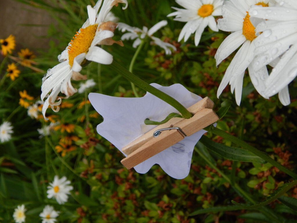 back of the bee clip craft attached to daisy in garden