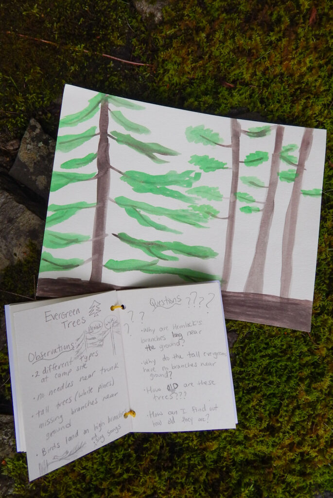 watercolor evergreen trees painting and nature notebook entry about the trees written in pencil on a rock wall with moss
