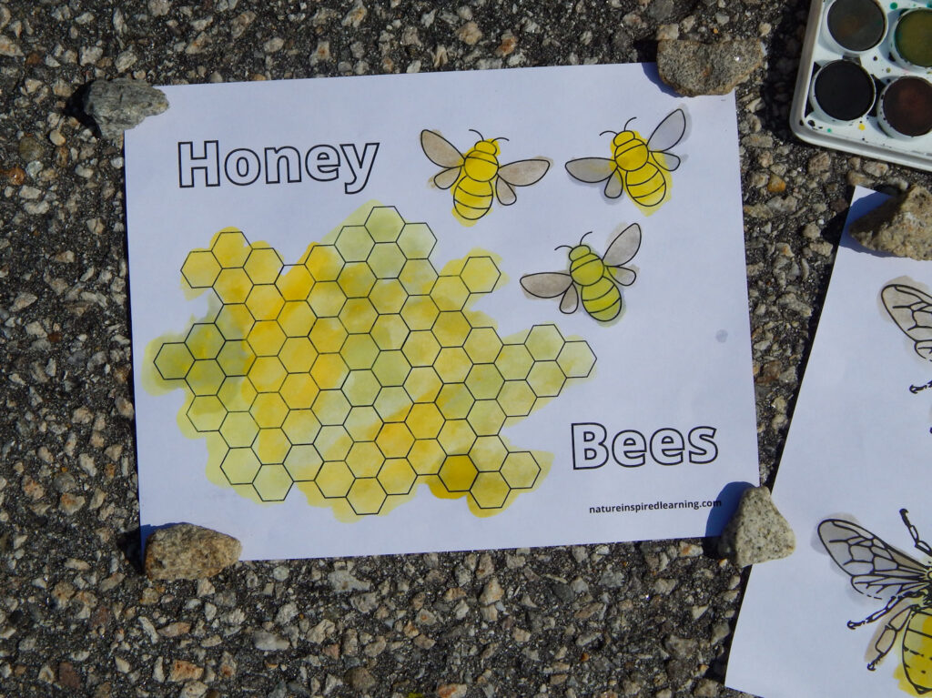 free printable bumble bee honeycomb coloring page outside on pavement colored using paint held down with rocks