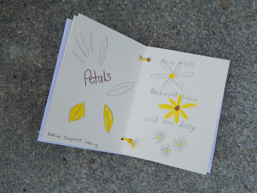 yellow flower nature notebook entry hand drawn illustrations with text on stone
