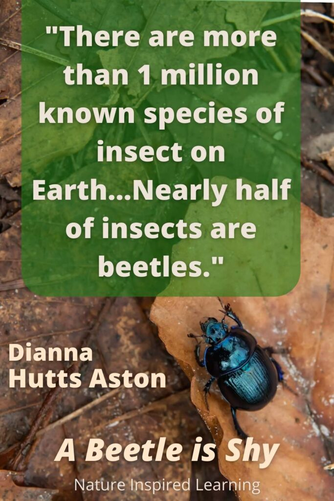 a quote about beetles from Hutts Aston's bug book for kids A Beetle is Shy with a bright blue and black beetle on brown leaves