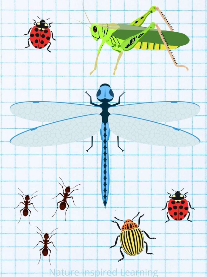 bug clip art on graph paper two red lady bugs one green grasshopper one blue dragonfly three ants and one yellow and orange beetle