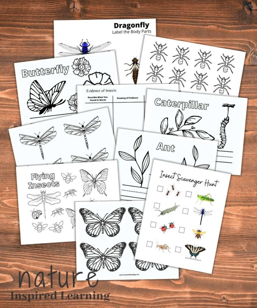 a collection of free insect printables on wooden background butterfly template, insect scavenger hunt, ant coloring pages, caterpillar coloring page, dragonfly printable, dragonfly template, and the text nature Inspired Learning