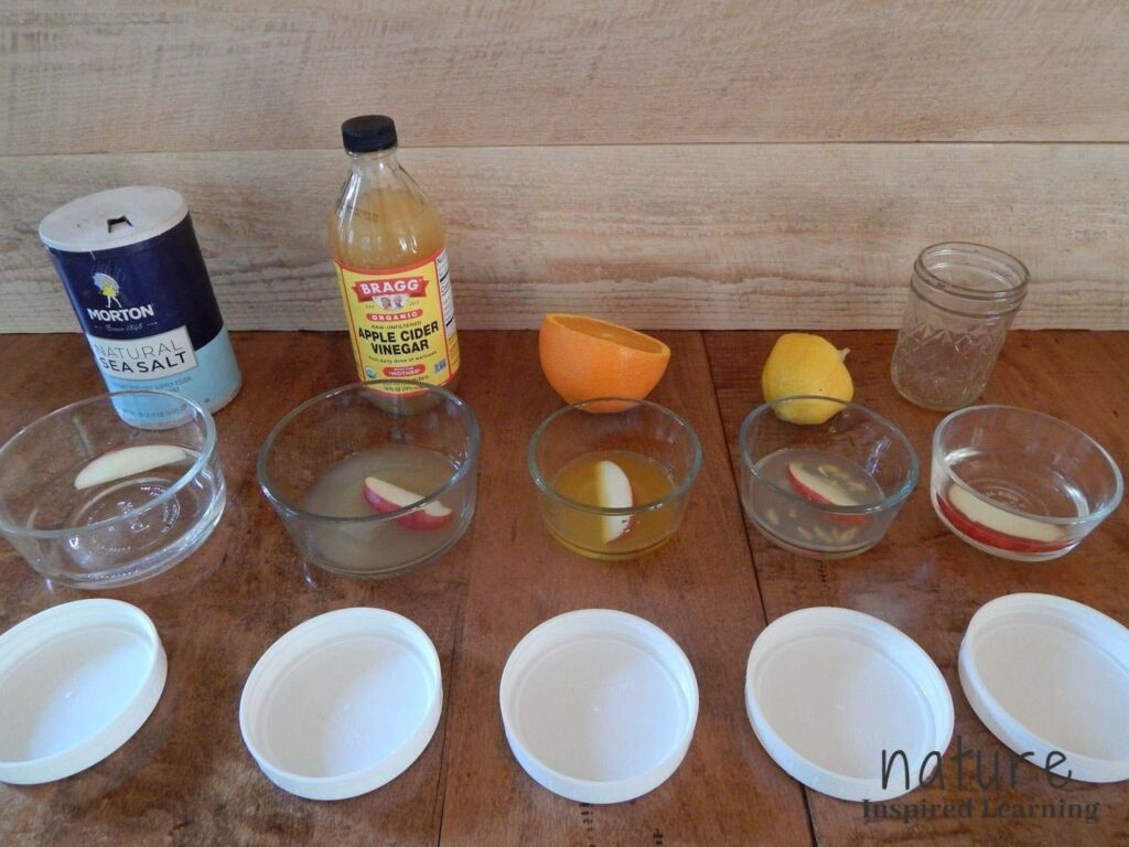apple oxidation experiment apple slices in various liquids on a wooden table liquids in small glass containers white plastic lids in front of containers supplies to make liquids behind the glasses text nature inspired learning