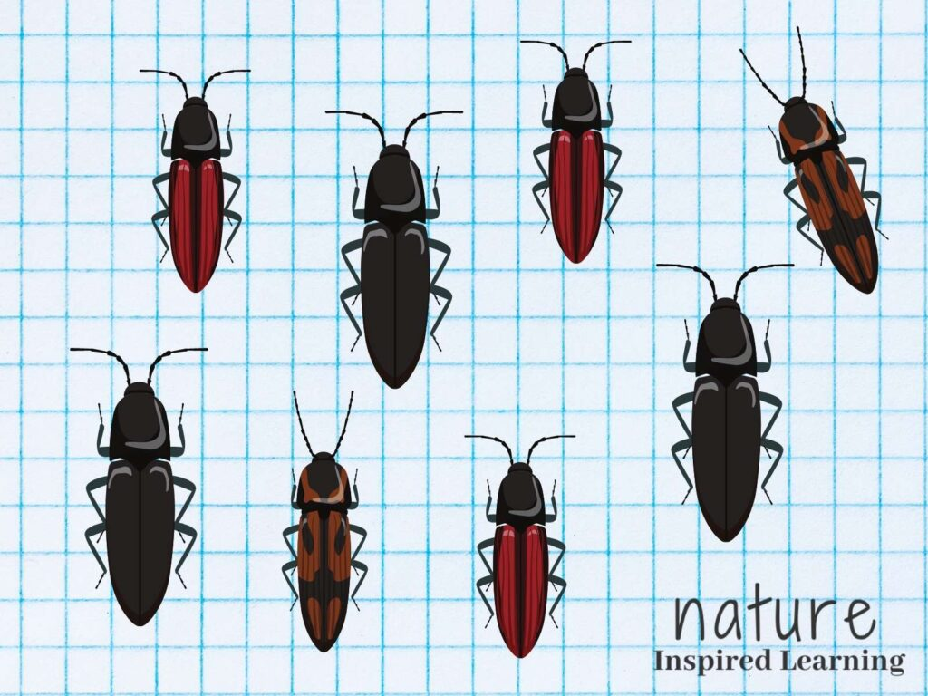 click beetle clip art black click beetles, red and black click beetles, and black spotted click beetles on blue graph paper text nature inspired learning bottom right corner