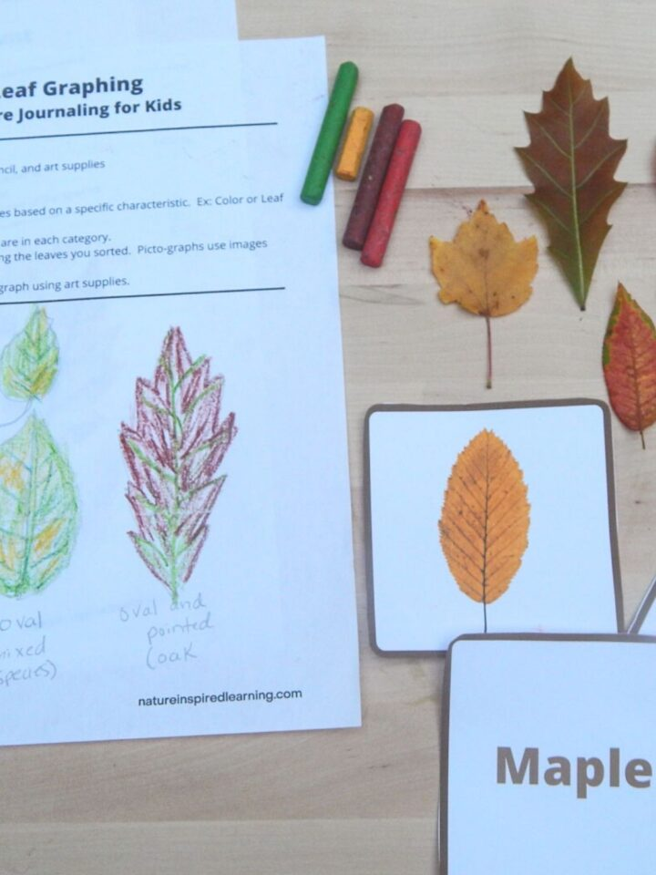 fall leaf printables and activity cards on a wooden surface with a red yellow brown and green crayons with three colorful fall leaves