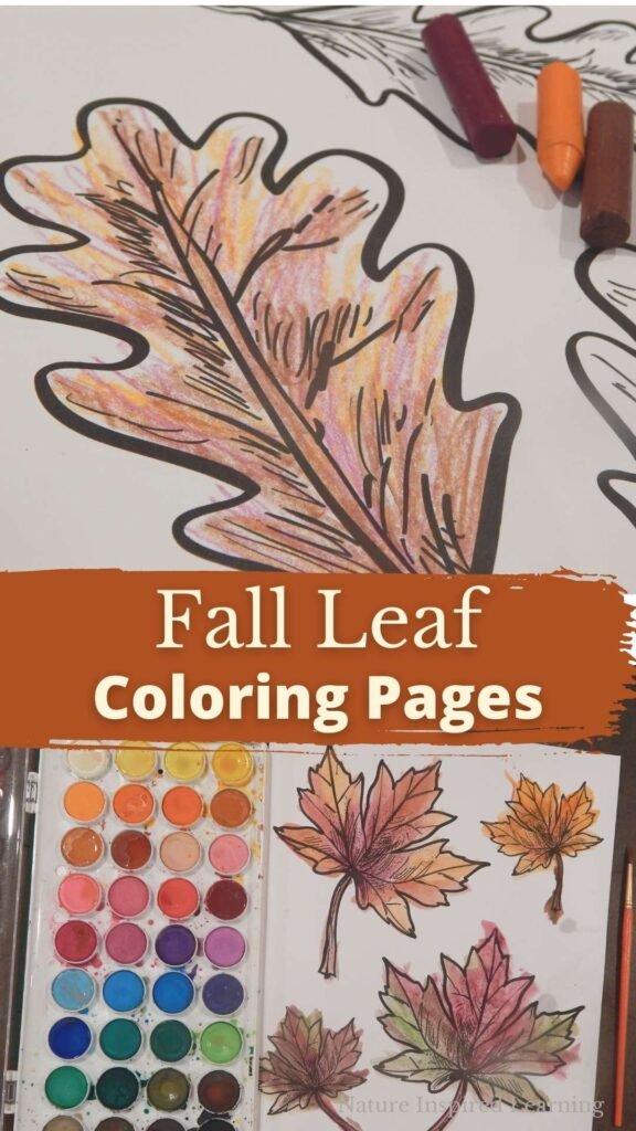 oak leaf coloring page colored in using crayons art supplies in the corner text fall leaf coloring pages in the middle watercolor painted maple tree leaf coloring page in fall colors