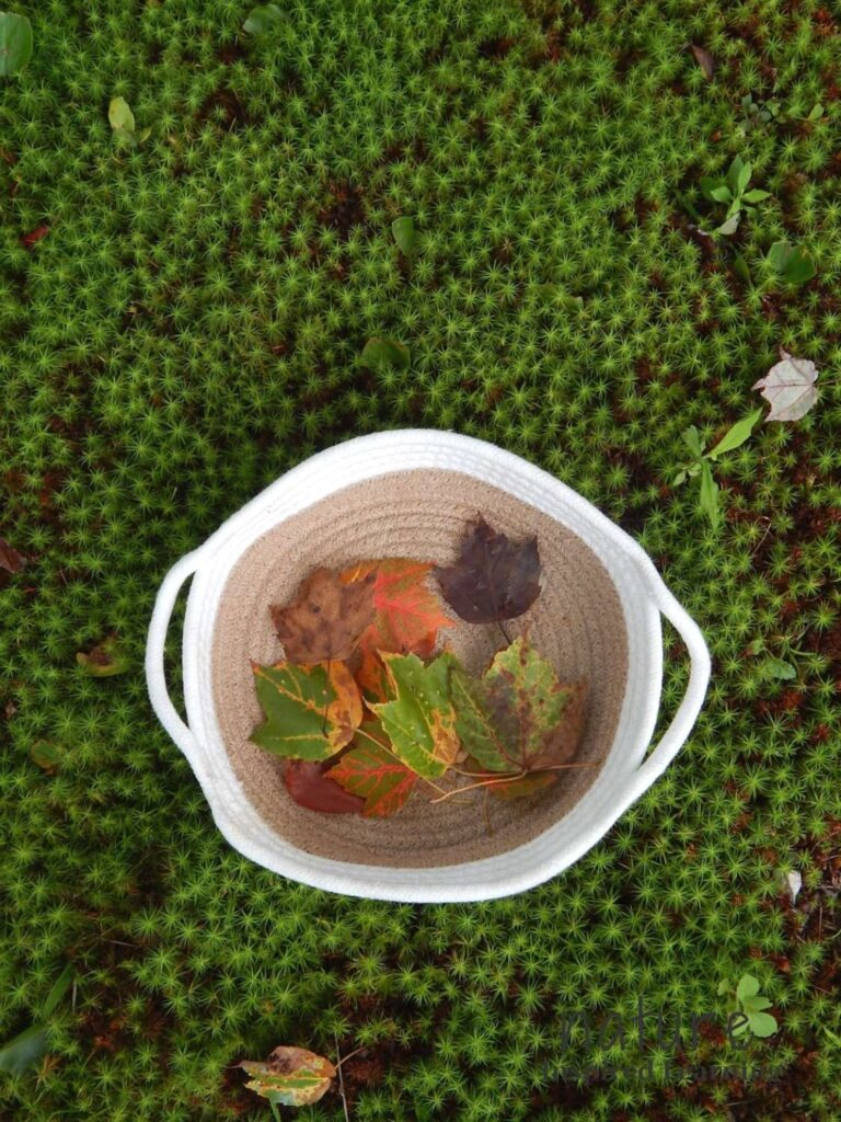 fabric basket filled with a collection of colorful fall maple leaves sitting on the ground covered in green moss