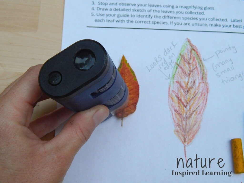hand holding a navy blue and black field microscope over a small red orange fall leaf on a nature journal printable with a hand drawn leaf colored in with labels and one broken yellow crayon