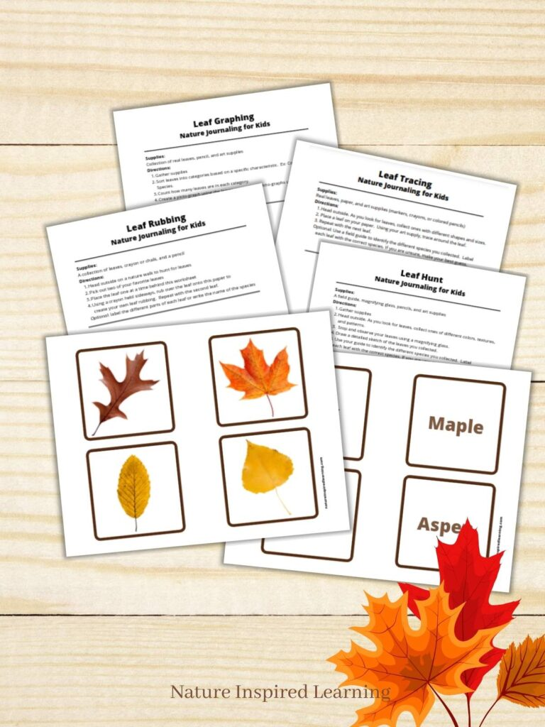 fall leaf activity printable pack overlapping pages on a wooden background with three colorful fall leaves in the corner