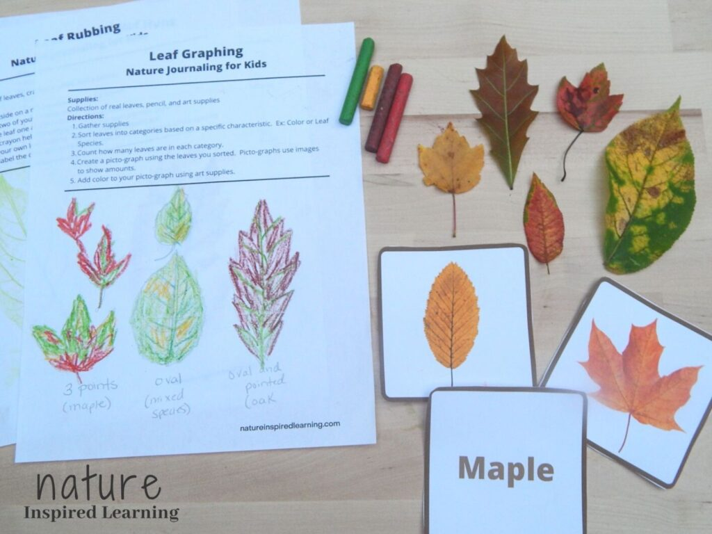 fall leaf printables with hand drawn colorful fall leaf drawings three fall leaf identification cards five real leaves and four crayons red, brown, yellow, and green all on a wooden surface